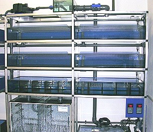 Xenopus rack with individual designed glass cabins