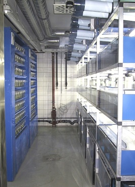 left side: two PP-modules / right side: Xenopus racks with fine filters on top and biofilters on the bottom